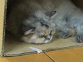 Cats of Yi Tien Palace, #2496