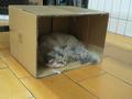 Cats of Yi Tien Palace, #2497