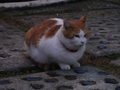 Local Cats, #0201