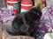 Cats of Kyoto, 梅宮大社, #3767