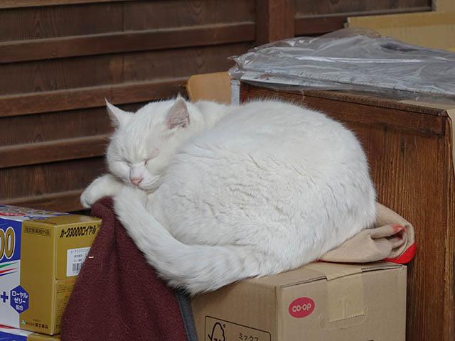 Cats of Kyoto, 梅宮大社, #3777