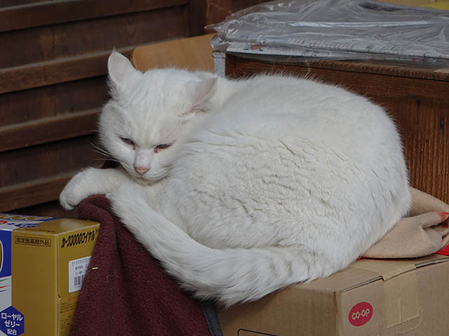 Cats of Kyoto, 梅宮大社, #3778