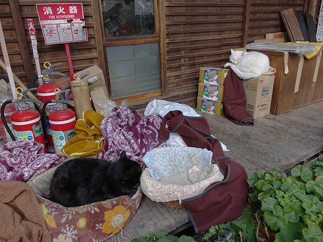 Cats of Kyoto, 梅宮大社, #3779