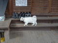 Cats of Kyoto, 梅宮大社, #3780