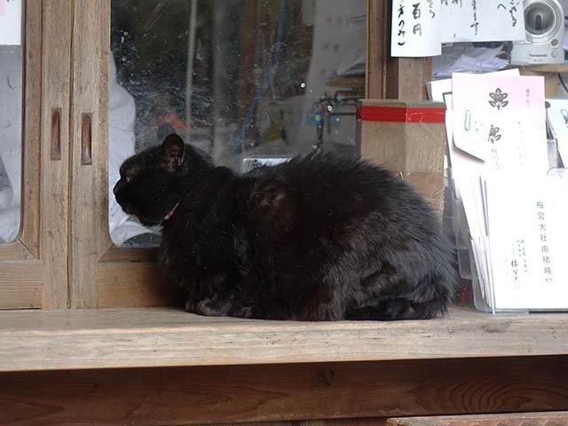 Cats of Kyoto, 梅宮大社, #3784
