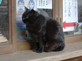 Cats of Kyoto, 梅宮大社, #3786