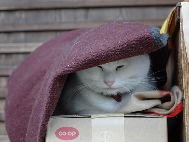 Cats of Kyoto, 梅宮大社, #3790