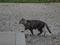 Cats of Kyoto, ツキ@梅宮大社, #3792