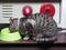 Cats of Kyoto, ツキ@梅宮大社, #3797