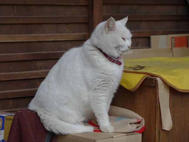Cats of Kyoto, 梅宮大社, #3807