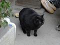 Cats of Kyoto, 梅宮大社, #3808