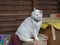 Cats of Kyoto, 梅宮大社, #3811
