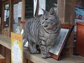 Cats of Kyoto, ツキ@梅宮大社, #3814