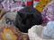 Cats of Kyoto, 梅宮大社, #3815