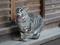 Cats of Kyoto, ツキ@梅宮大社, #3817