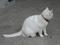 Cats of Kyoto, 梅宮大社, #3820