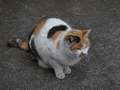 Local Cats, #0222