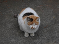 Local Cats, #0223