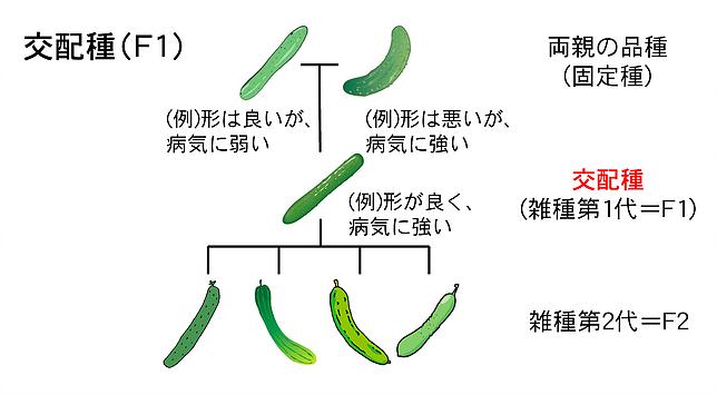 f:id:hiroshi-kizaki:20191123175941p:plain