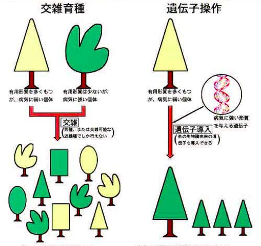 f:id:hiroshi-kizaki:20191123180625p:plain