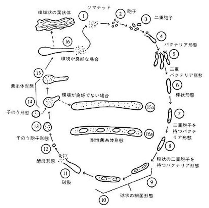 f:id:hiroshi-kizaki:20200202164042p:plain