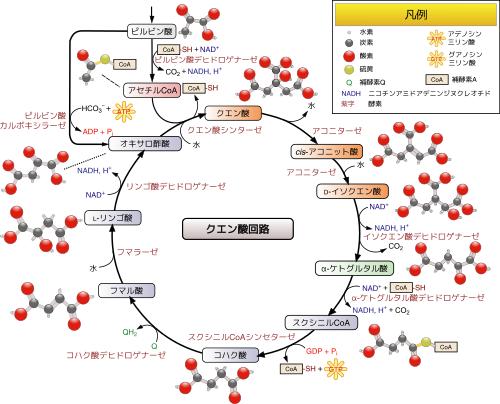 f:id:hiroshi-kizaki:20200206194327p:plain