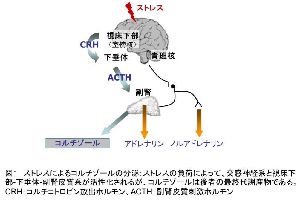 f:id:hiroshi-kizaki:20200206195837j:plain