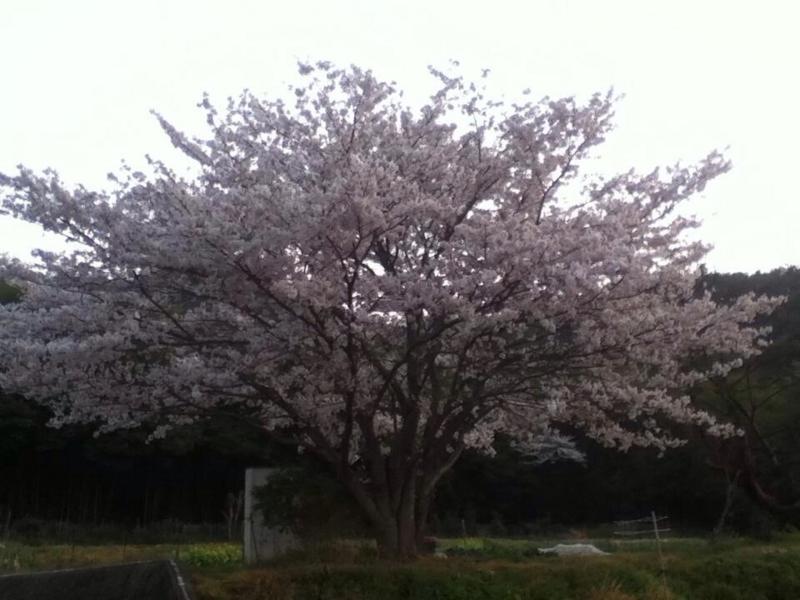 f:id:hiroshi44103:20130405083457j:plain