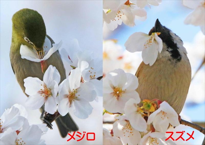 f:id:hiroshisj:20180406134116j:image