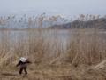 京都新聞写真コンテスト 孤独なヨシ刈