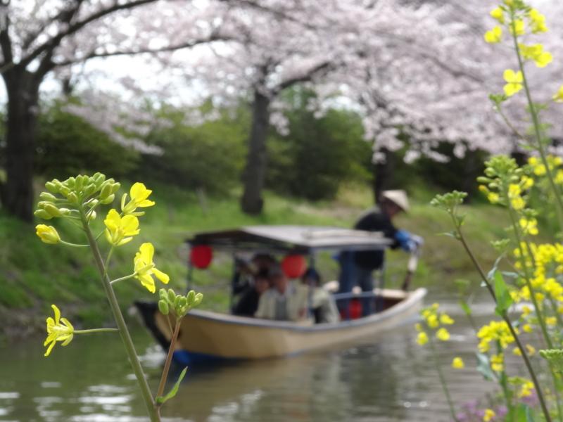 京都新聞写真コンテスト 水郷巡り