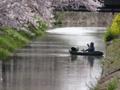 京都新聞写真コンテスト ベストアングル