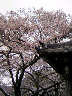 f:id:hirotaka72:20100404141527j:image
