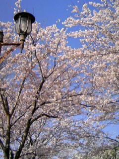 f:id:hirotaka72:20100408083500j:image