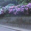 f:id:hirotaka72:20121111124931j:image