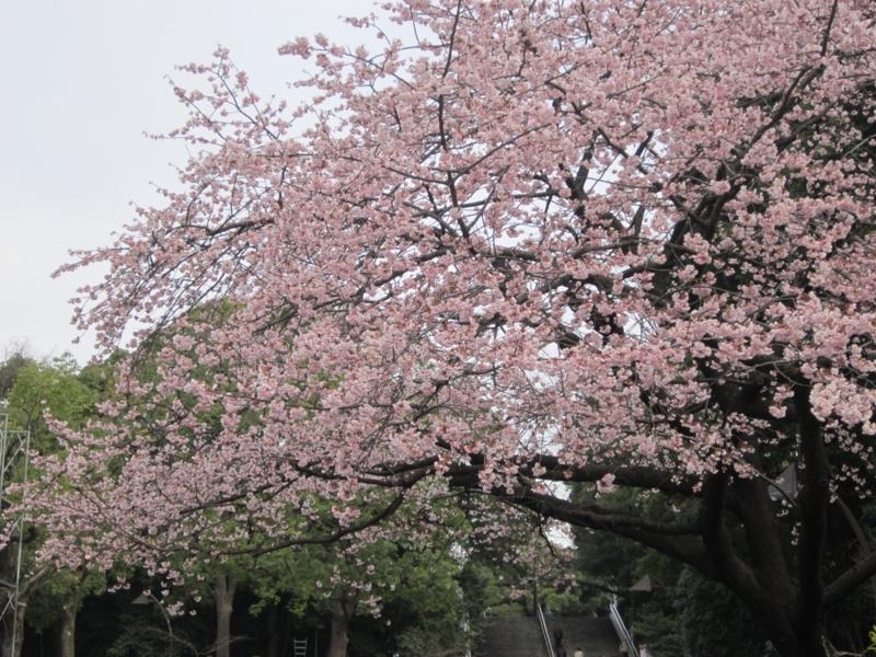 f:id:hirotaka72:20160305100335j:image:w380