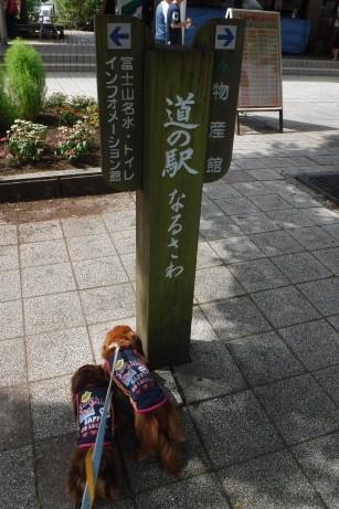 f:id:hirotaka72:20160814093110j:image:w185