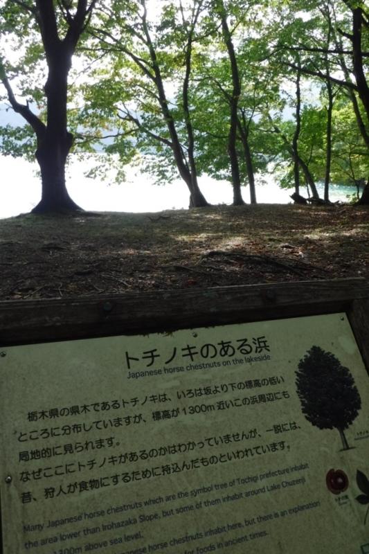 f:id:hirotaka72:20161002112851j:image:w185