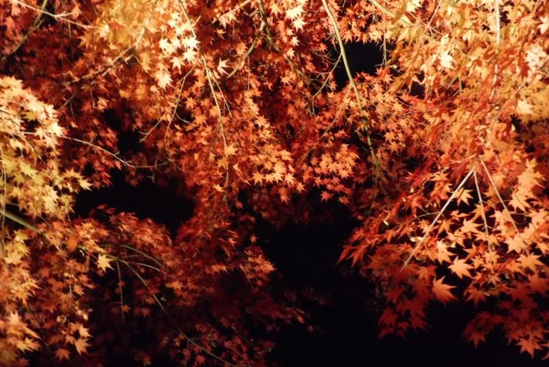 f:id:hirotaka72:20161113172950j:image:w300