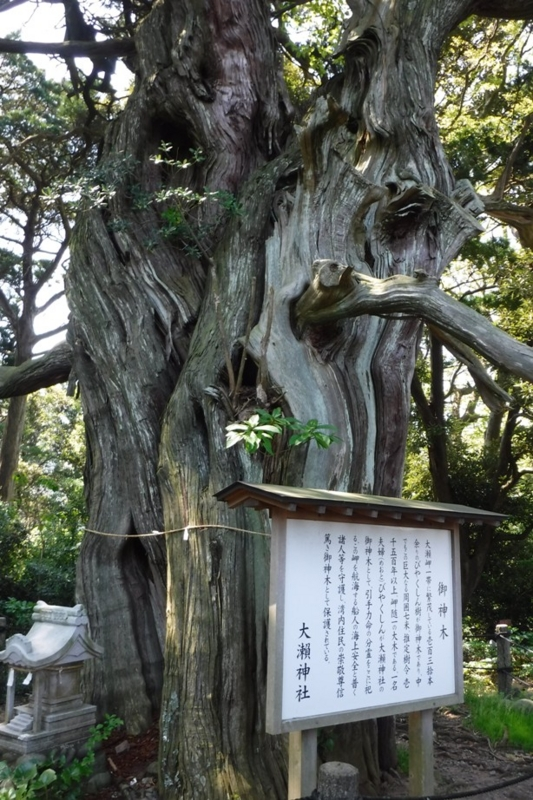 f:id:hirotaka72:20170429100951j:image:w200