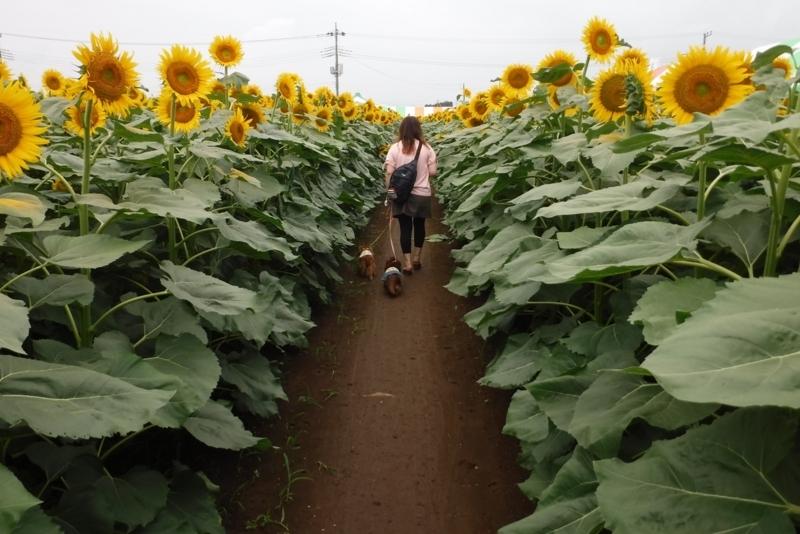 f:id:hirotaka72:20170729100621j:image:w415