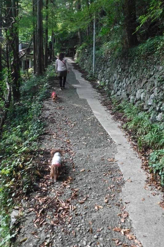 f:id:hirotaka72:20170930145130j:image:w185