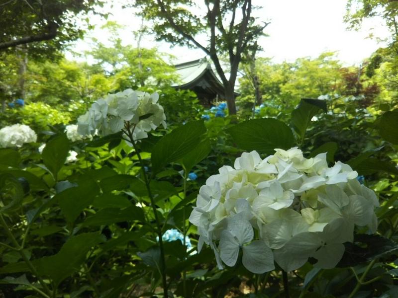 f:id:hirotaka72:20180602111930j:image:w603