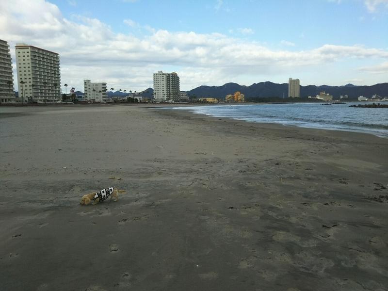 f:id:hirotaka72:20181215132220j:image:w300