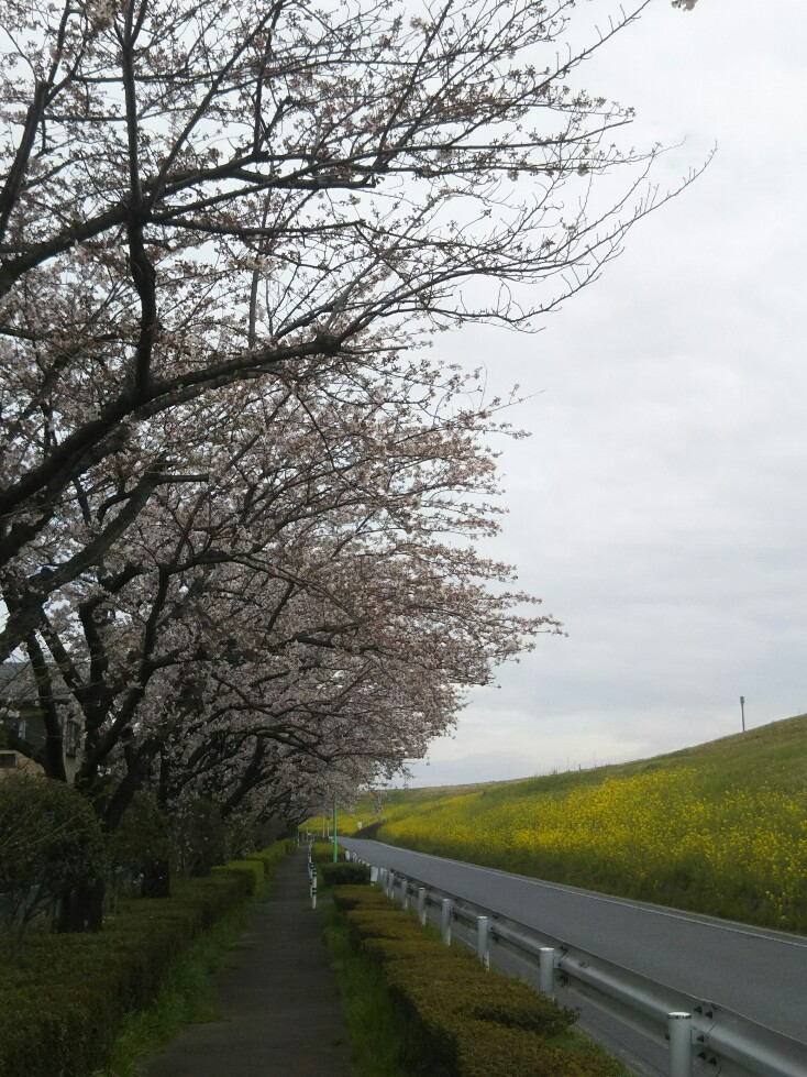 f:id:hirotaka72:20200328101502j:plain