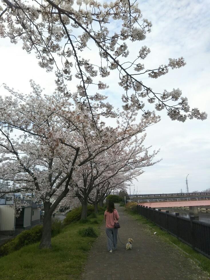 f:id:hirotaka72:20200328102844j:plain