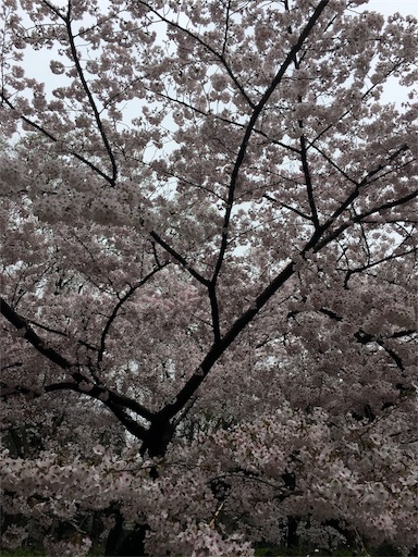 f:id:hirouehiroue:20170413215603j:image
