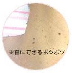 f:id:hiroyuki-aya:20170813095316j:plain
