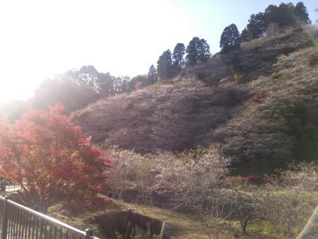 f:id:hiroyukmurata:20170103224804j:plain