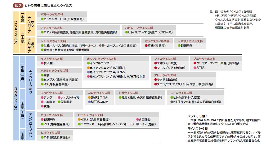 f:id:hirukawalaboratory:20200506005703p:plain